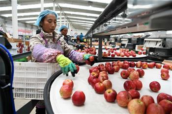 구이저우 웨이닝: 산업 빈곤지원 풍성한 결실