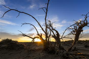 사막 속 '기이한 숲'