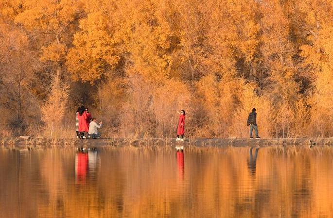 간쑤 진타: 금빛 물결 일렁이는 후양림
