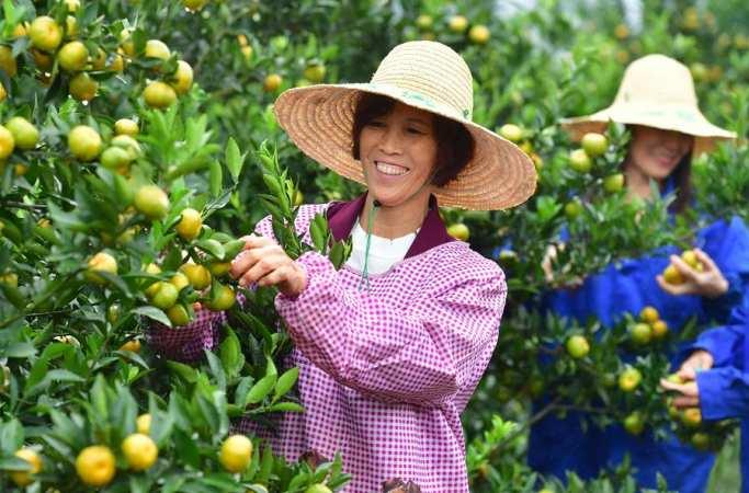 광시 루자이: 감귤 재배 덕에 빈곤 탈출