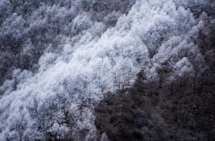 이색 풍경 펼쳐진 고원 삼림공원