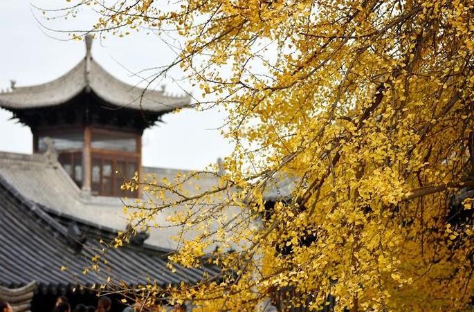 천년 은행나무가 있는 고찰 풍경…지천에 깔린 금빛 은행잎 융단