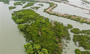 하늘에서 내려다본 해상 삼림—맹그로브숲