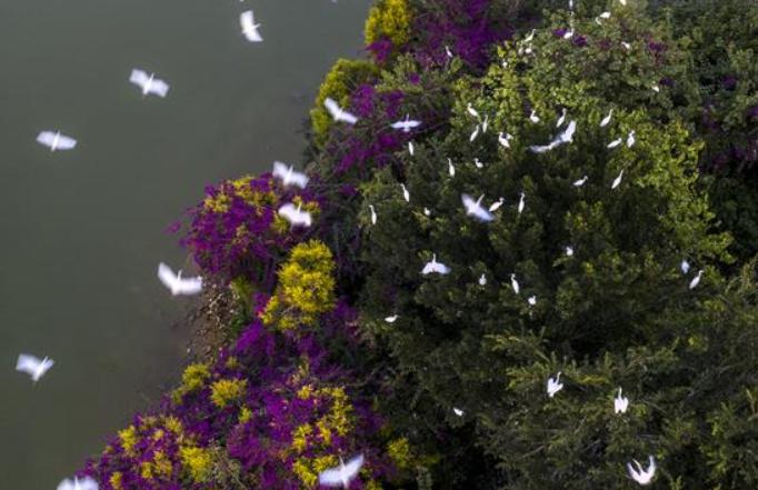 푸젠 장저우: 생태단지 섬 호수와 백로가 있는 정경