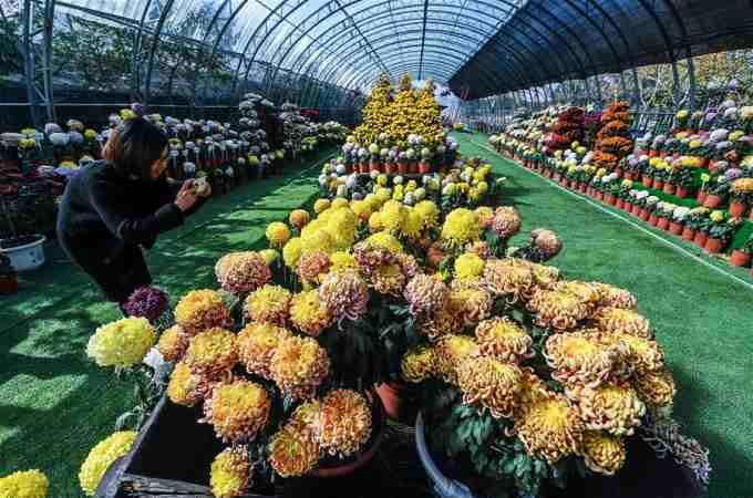 유람객 부르는 아름다운 시골 꽃전시