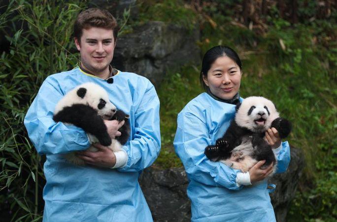 벨기에 파이리 다이자 동물원 판다 쌍둥이 '바이디' '바오메이'로 명명
