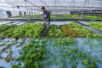 물고기·새우와 식물의 공생…생태순환 통한 친환경·무오염 재배 및 양식