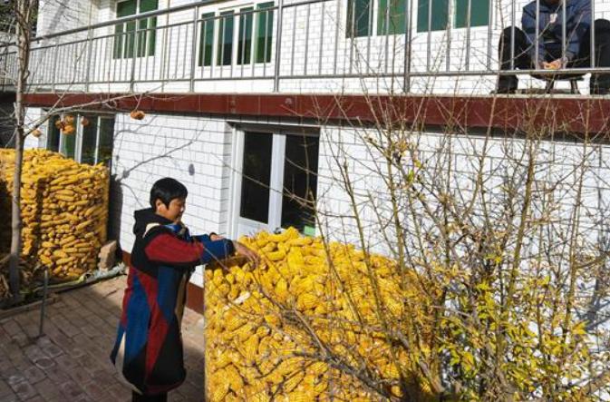 허베이 라오양: 예쁜 정원 조성으로 아름다운 농촌 '브랜딩'