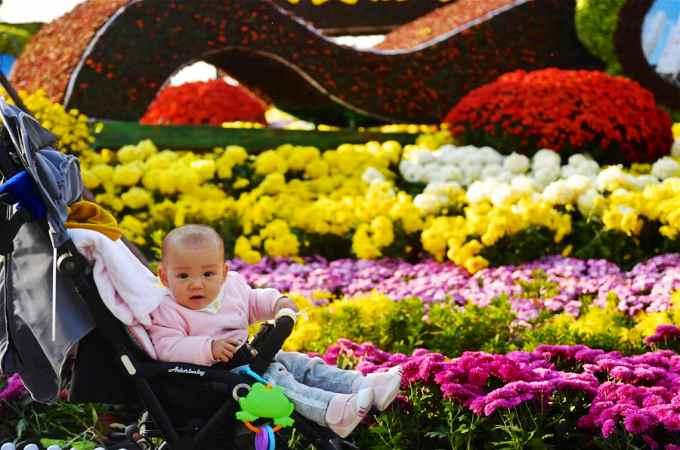 장시 난창 국화전시회: 초겨울 은은한 국화향의 유혹