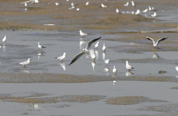 겨울 호수 위 새들의 군무