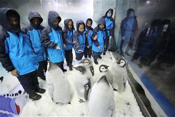 광둥 주하이: 초등학생, 황제펭귄 만져보기 체험