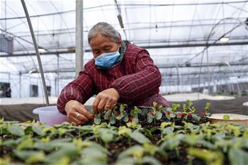 충칭: 종묘 재배해 농가에 공급