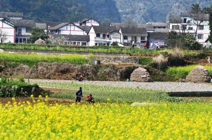 농사철 놓치지 않고 여름작물의 풍작 확보—각 지역, 봄갈이에 총력