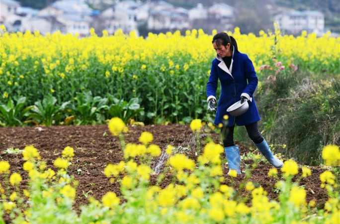 구이저우: 봄에 뿌리는 희망의 종자
