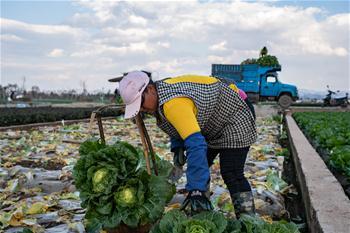 윈난퉁하이: 봄농사로 바쁜 부지런한 농사꾼