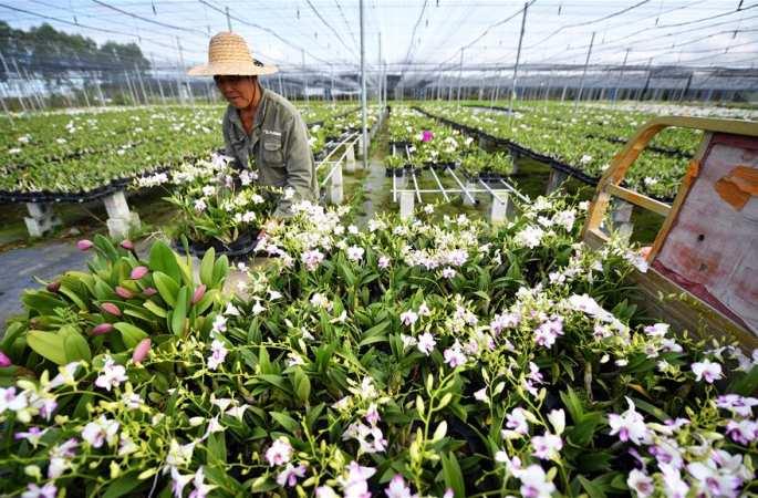 하이난 둥팡: 특산 농산물 기지 작업으로 분주