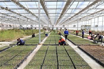허베이 롼저우: 생산에 박차…농민의 소득 증대에 일조