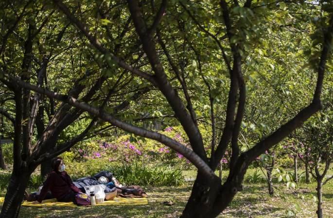 우한: 장탄공원의 봄