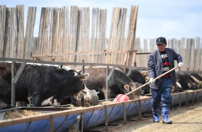 신장 타청: 메이저 업체, 농목민 빈곤퇴치 공격전 성과의 공고에 조력