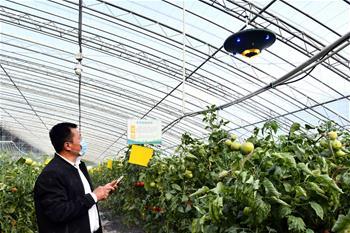 '중국 채소의 본고장' 서우광…비닐하우스 스마트 관리 실현