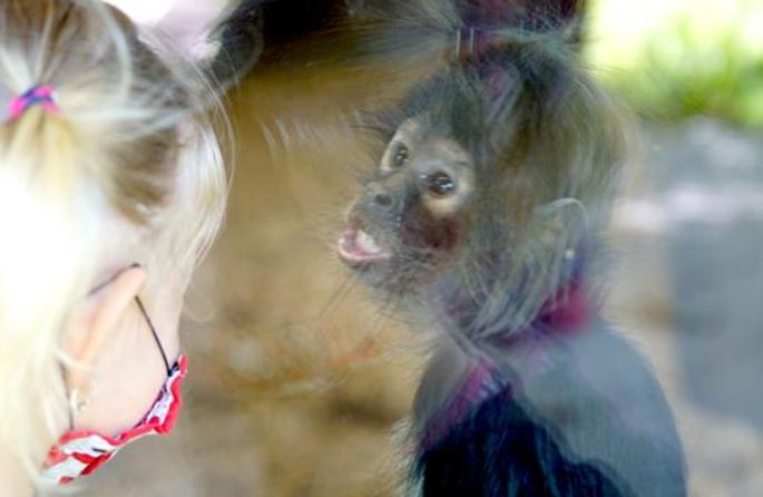 프라하 동물원 부분 재개장