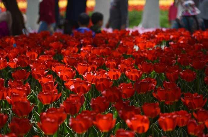 칭하이 시닝: 시민 나들이 '초록빛 자연' 만끽