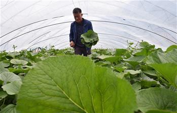 지린 안투: 산나물 경제…농가 수입 창출