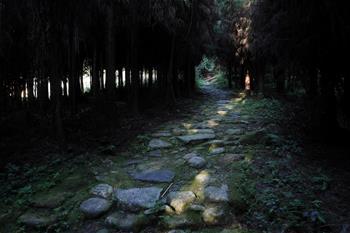 쓰촨 잉징: 차마고도 복구