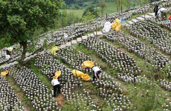 구이저우 젠허: 효율적인 산간지대 농업 발전…소득 증대에 일조