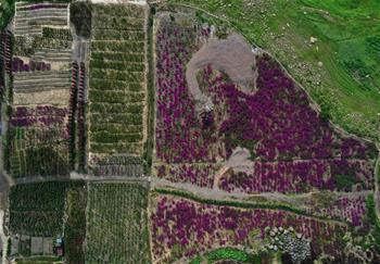 충칭 완저우: 생태 농업으로 발전 촉진