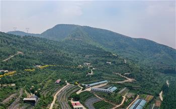 허베이 펑룬: 초록옷 입은 황량한 산비탈, 잘 사는 농민