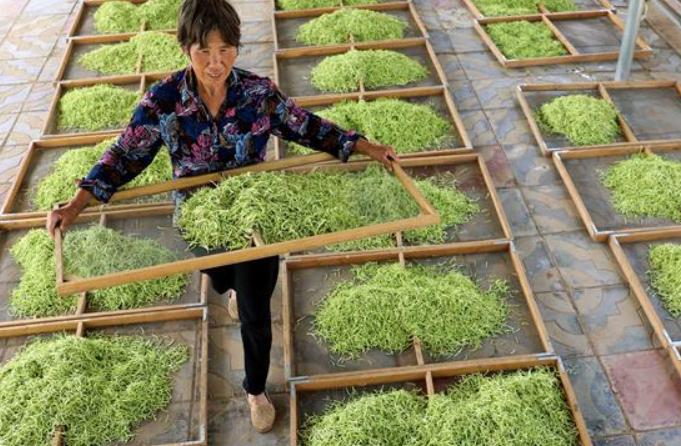 허베이 싱탕: 중약재 재배사업, '부의 추월차선'
