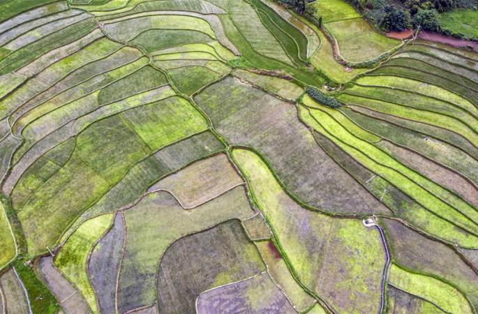 구이저우 비제: 여름철 농촌 전원 풍경
