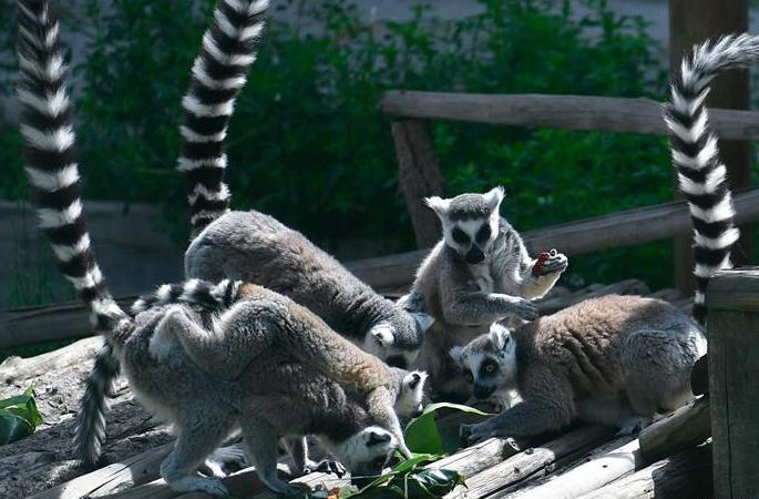 동물원에서 보내는 단오절