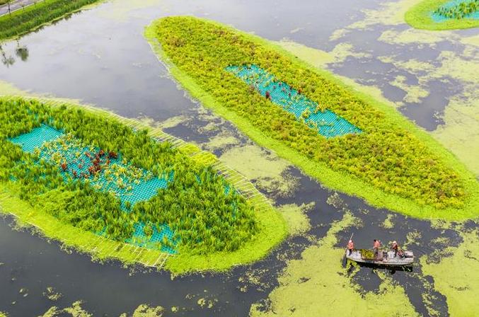 장쑤 써훙: 방류수로 가꾸는 생태공원