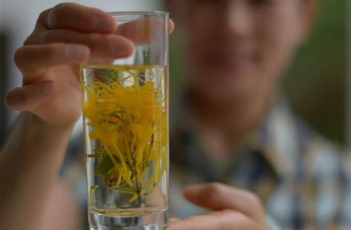구이저우 수이양: 금은화 산업 키워 농민 소득 늘려