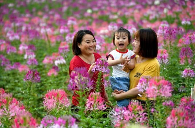 친링 소도시 물들인 형형색색 꽃물결