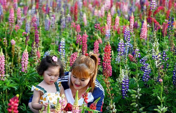 산시 타이바이: 활짝 핀 꽃 관광객 향해 손짓