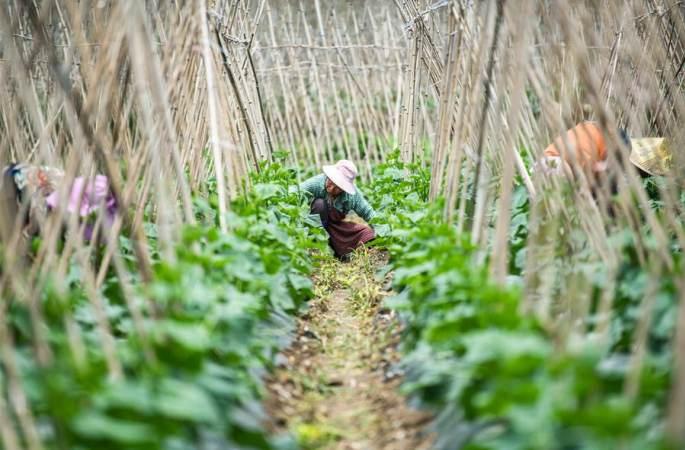 소서에 농사 한창