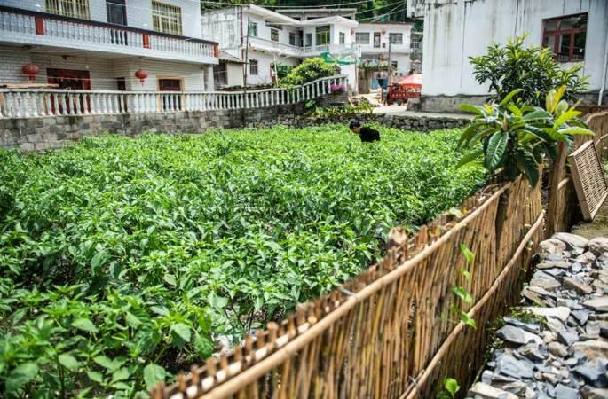 구이저우 류즈: 아름다운 농촌 수놓는'샤오캉 텃밭'