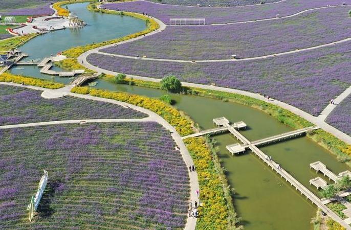 전원식 꽃의 도시로 변신한 고비사막 '니켈의 도시'