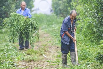 허베이 안핑: 일자리 마련으로 탈빈곤 도와