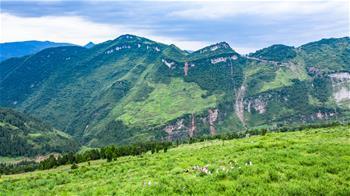 구이저우 퉁쯔: 산초 산업으로 소득 증대