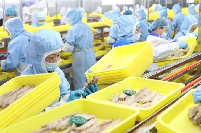 랴오닝 둥강: 어산물 가공 생산 안정