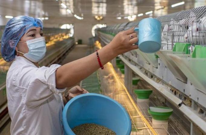 신장 허톈: 사육산업으로 빈곤 탈출 도와