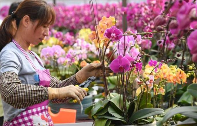 설 시즌 성수기 앞둔 꽃 시장 풍경