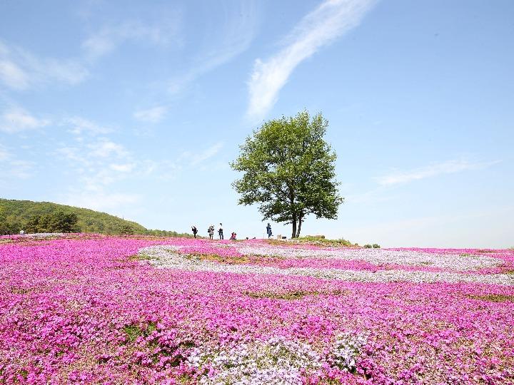 봄이다 봄'…中 각지 명소 나들이객으로 붐벼